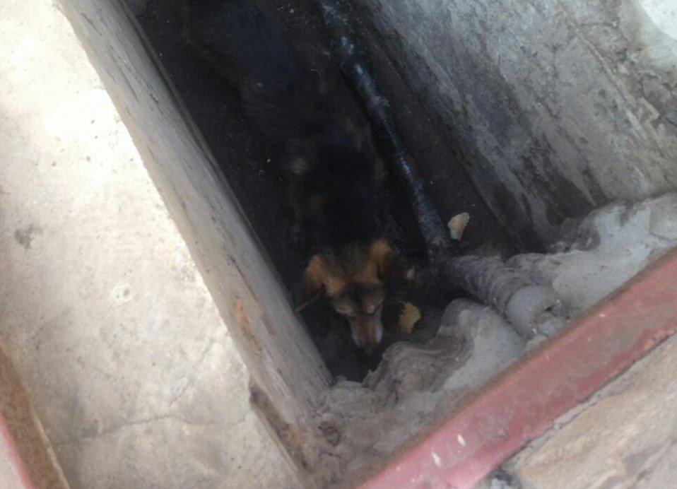 В Днепропетровской области спасли собаку из люка: она была там несколько дней, - ФОТО, фото-2