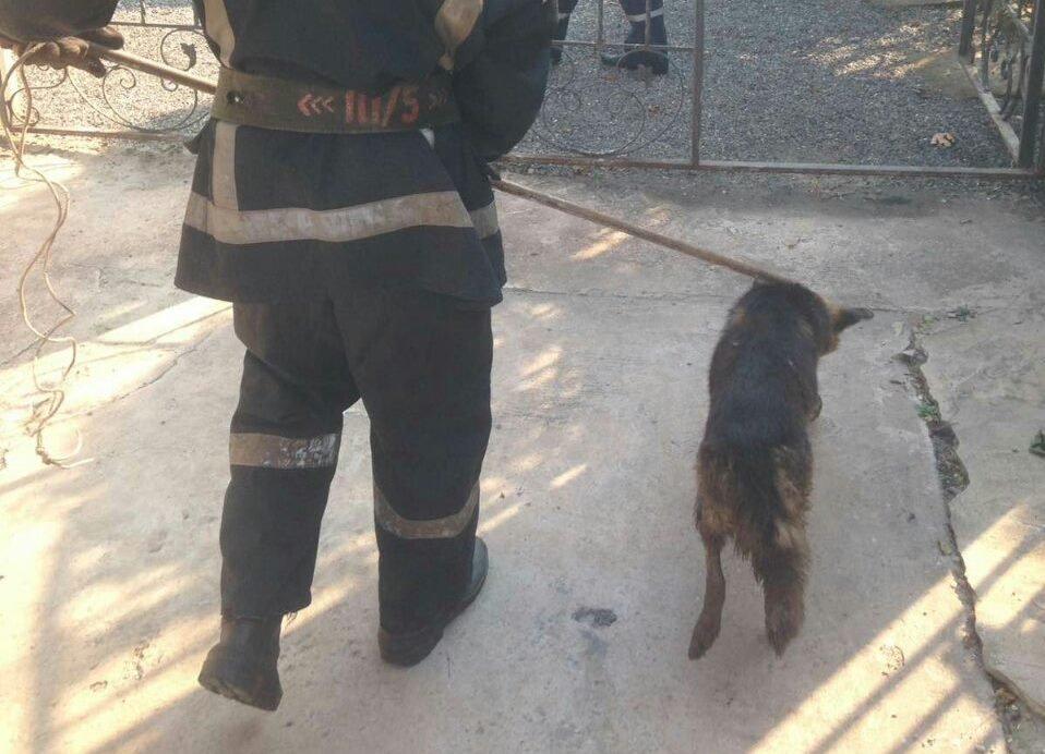В Днепропетровской области спасли собаку из люка: она была там несколько дней, - ФОТО, фото-3