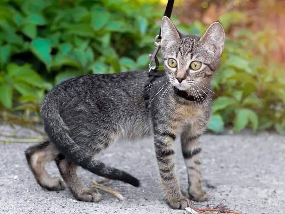 В Днепре пройдет бесплатная раздача котов, - АДРЕС, фото-2