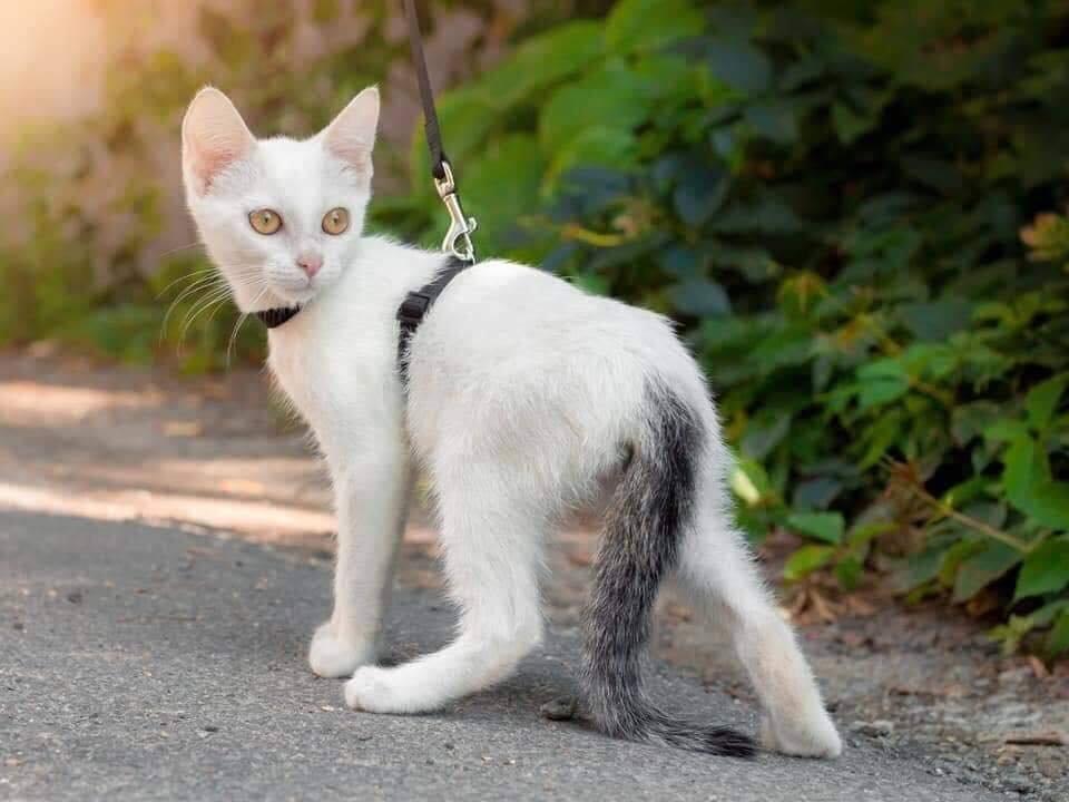 В Днепре пройдет бесплатная раздача котов, - АДРЕС, фото-6