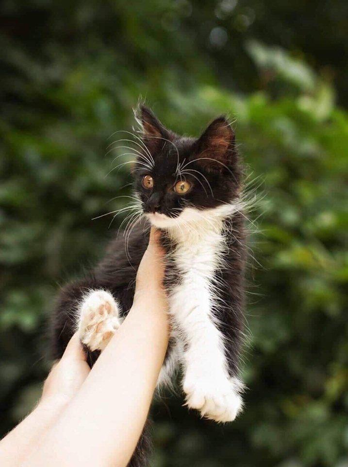 В Днепре пройдет бесплатная раздача котов, - АДРЕС, фото-3
