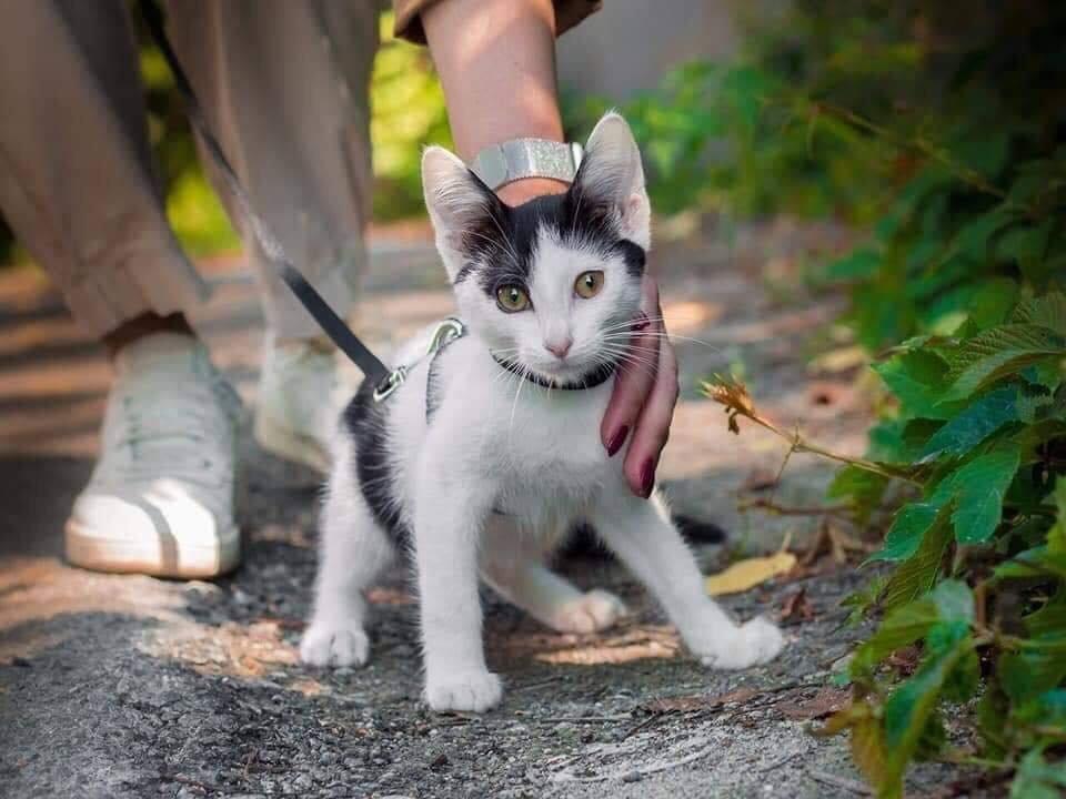 В Днепре пройдет бесплатная раздача котов, - АДРЕС, фото-4
