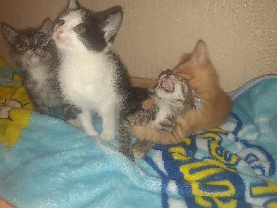 В Днепре пройдет бесплатная раздача котов, - АДРЕС, фото-5
