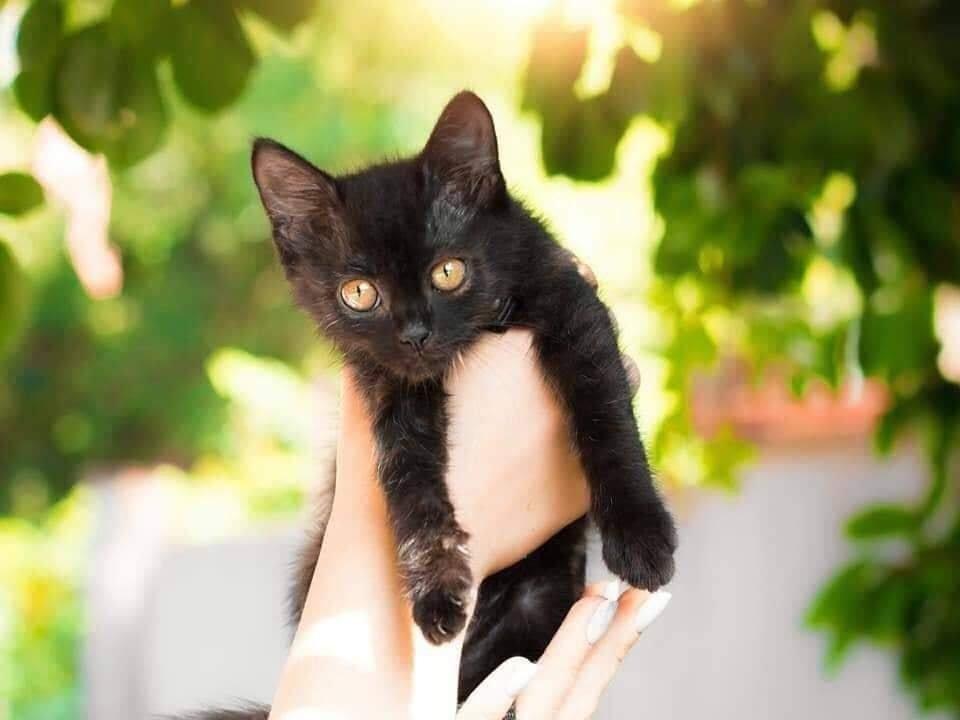 В Днепре пройдет бесплатная раздача котов, - АДРЕС, фото-7