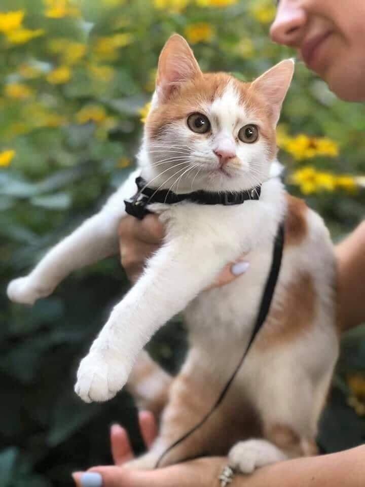 В Днепре пройдет бесплатная раздача котов, - АДРЕС, фото-1