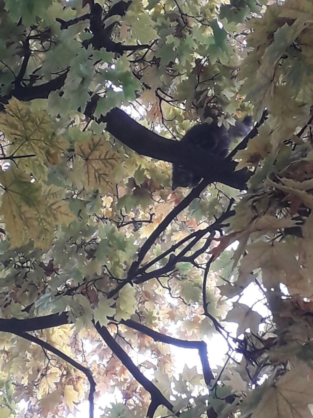 В Днепре пятеро пожарных спасали котика, - ФОТО, фото-4