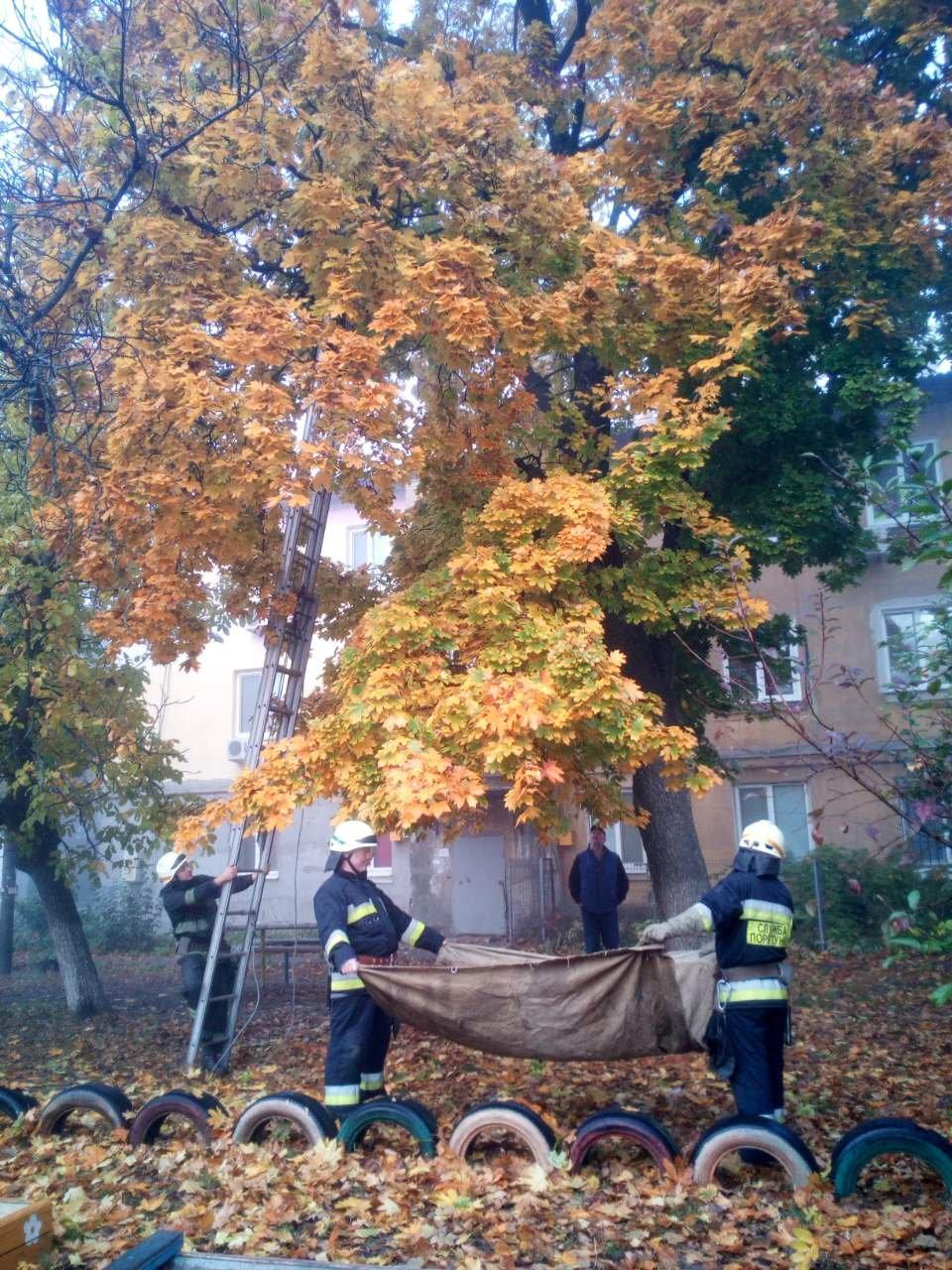 В Днепре пятеро пожарных спасали котика, - ФОТО, фото-1