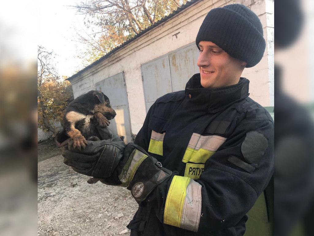 В Днепре пятеро спасателей помогли щенятам выбраться из ловушки, - ФОТО, фото-1