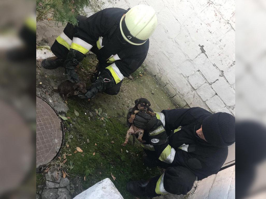 В Днепре пятеро спасателей помогли щенятам выбраться из ловушки, - ФОТО, фото-2