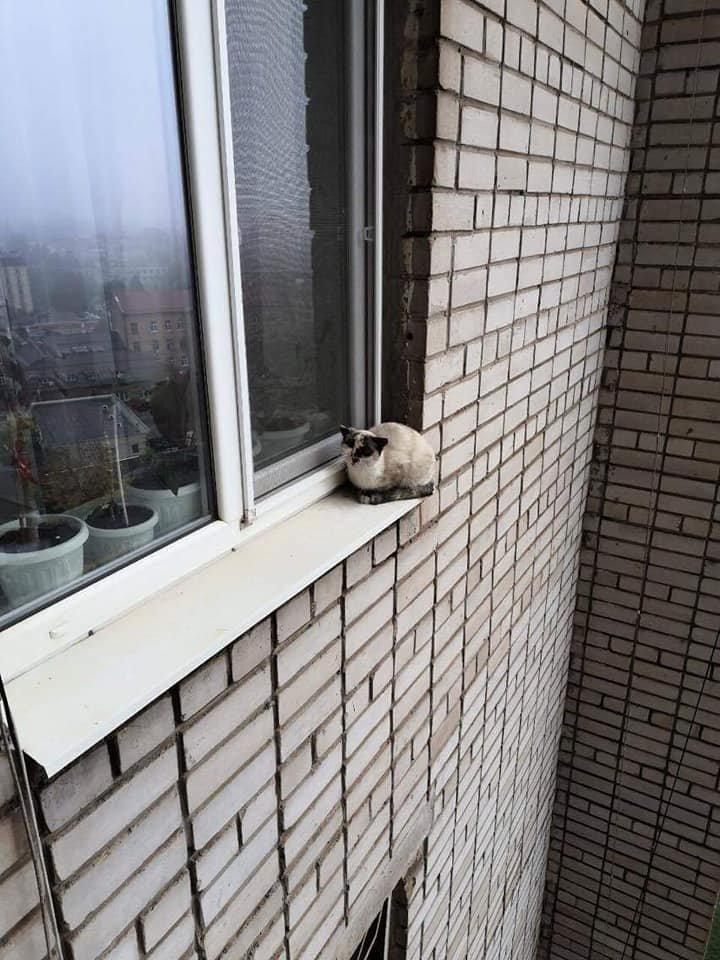 В Днепропетровской области котенок застрял на подоконнике 13-го этажа, - ФОТО , фото-1