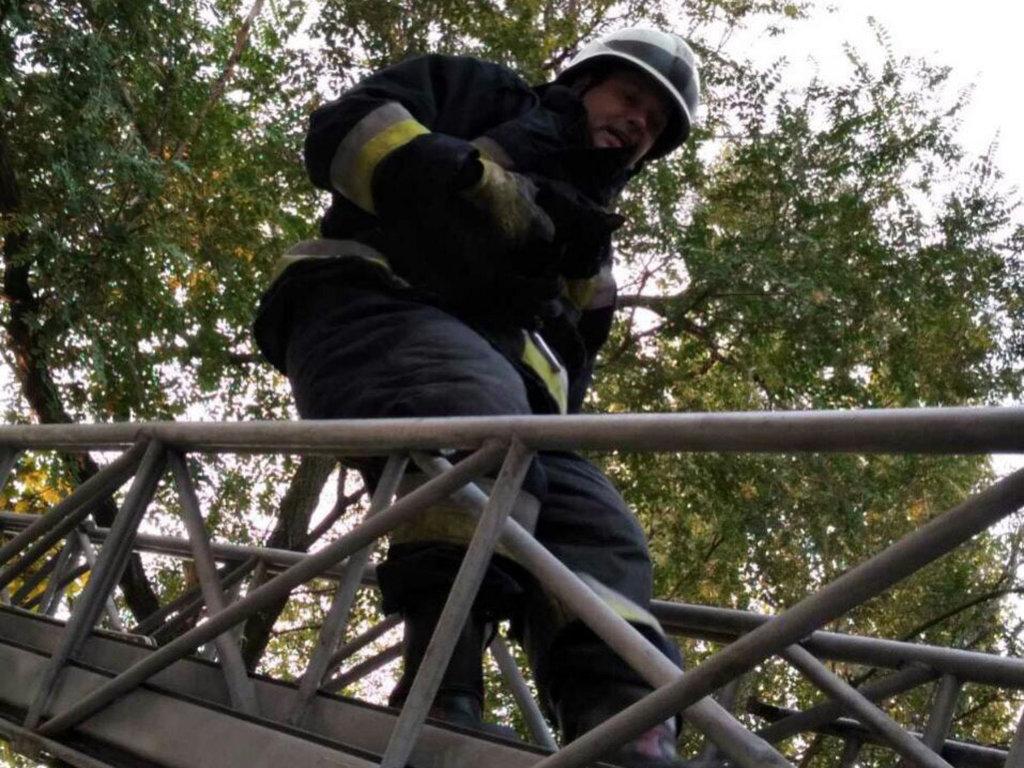 В Днепре спасатели сняли кота с дерева, - ФОТО, фото-1