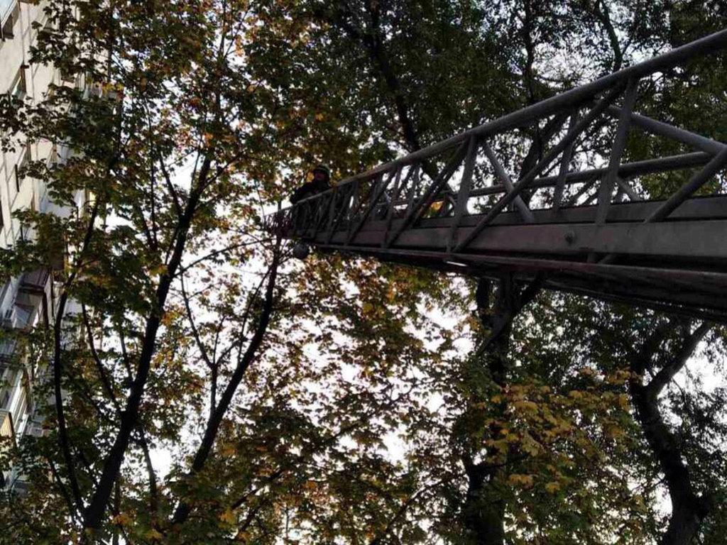 В Днепре спасатели сняли кота с дерева, - ФОТО, фото-2