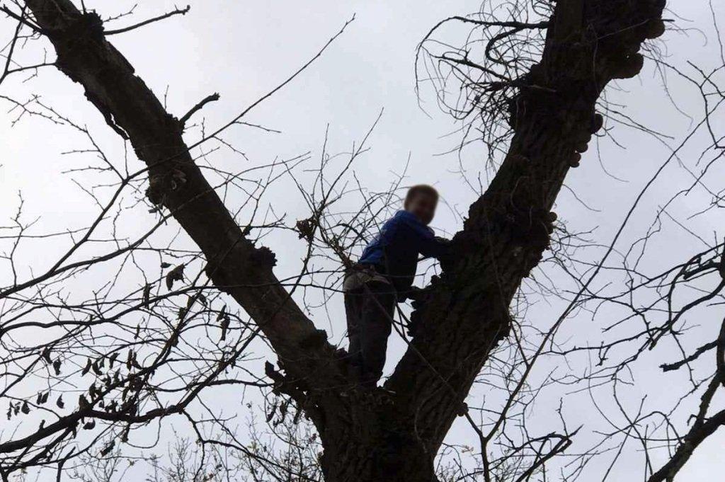 На Днепропетровщине спасли маленького грибника с 8-метрового дерева, - ФОТО, фото-1