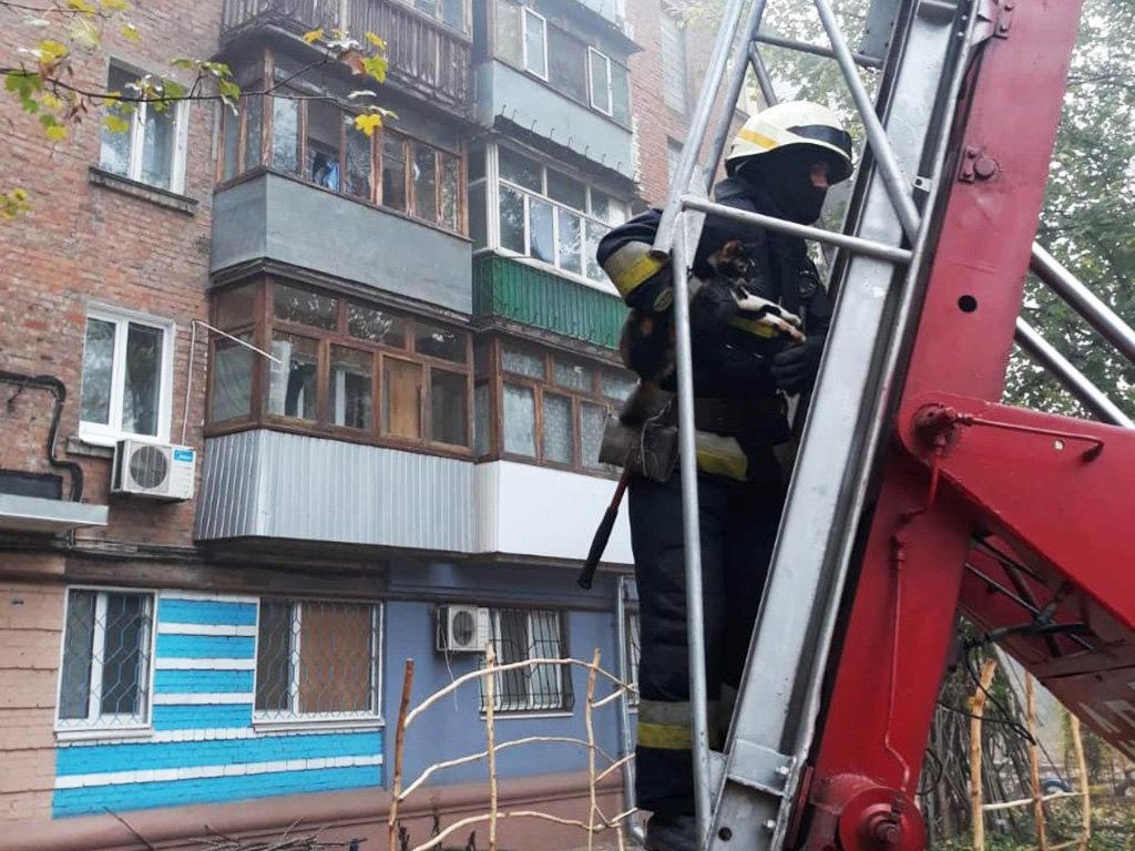 В Днепре восемь пожарных спасали кота, - ФОТО, фото-3