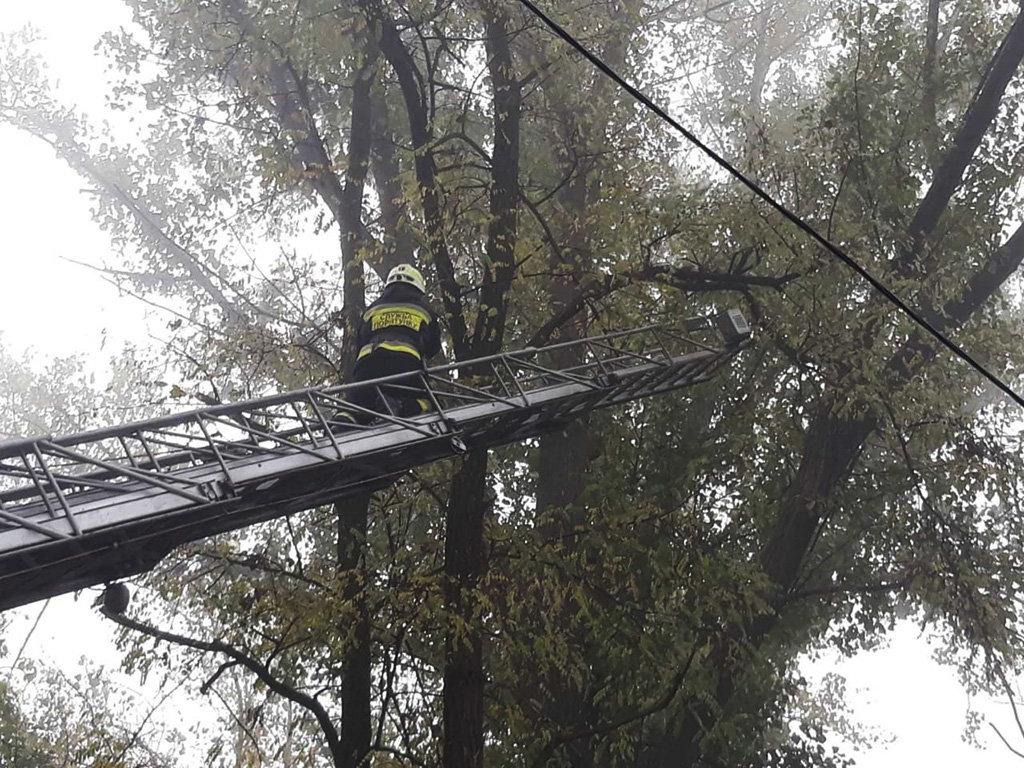 В Днепре восемь пожарных спасали кота, - ФОТО, фото-2