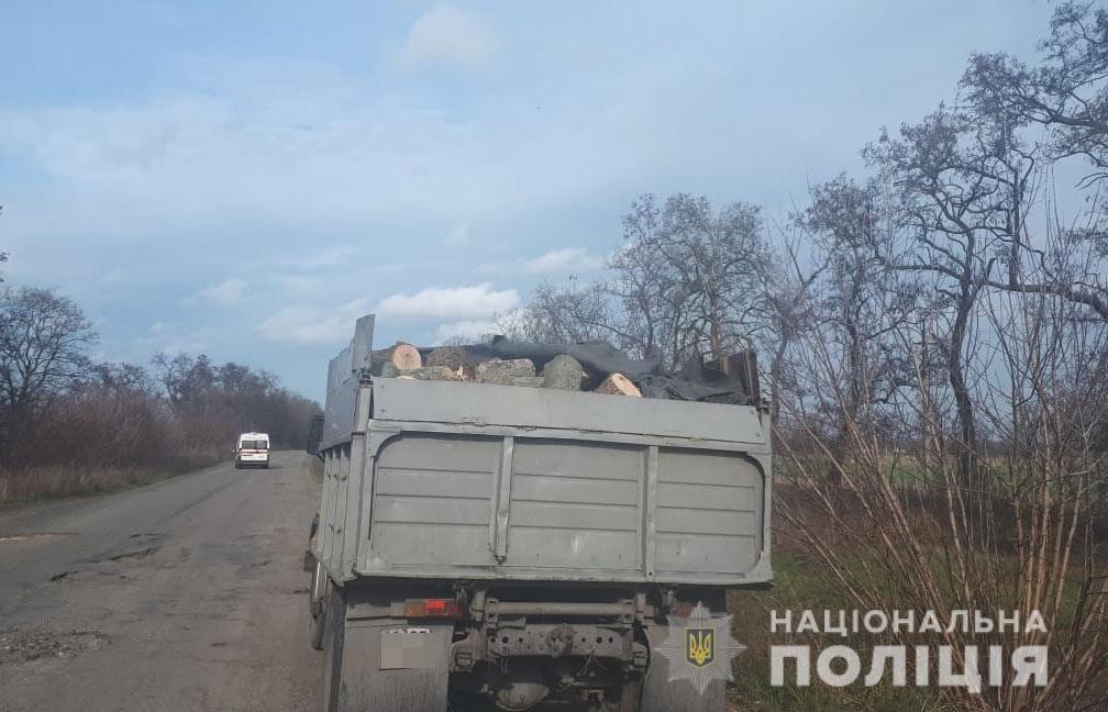В Днепропетровской области мужчина перевозил тонны незаконной древесины в грузовике, - ФОТО, фото-1