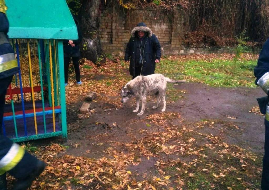 В Днепре собака застряла под домиком на детской площадке, - ФОТО, фото-2