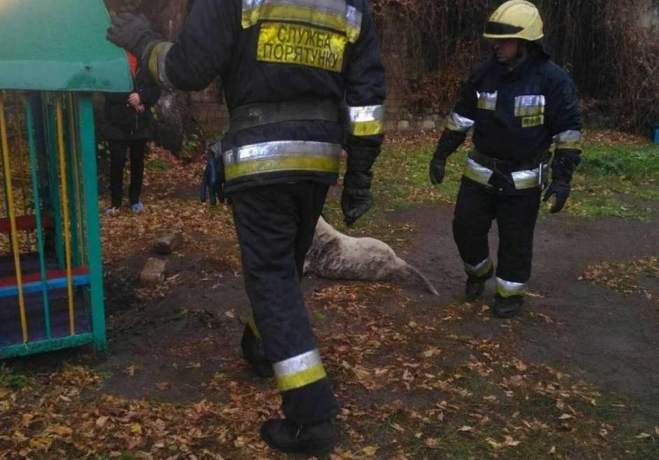 В Днепре собака застряла под домиком на детской площадке, - ФОТО, фото-3