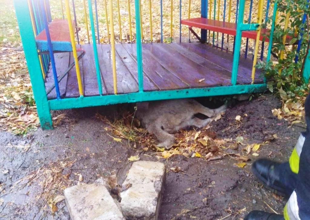 В Днепре собака застряла под домиком на детской площадке, - ФОТО, фото-1