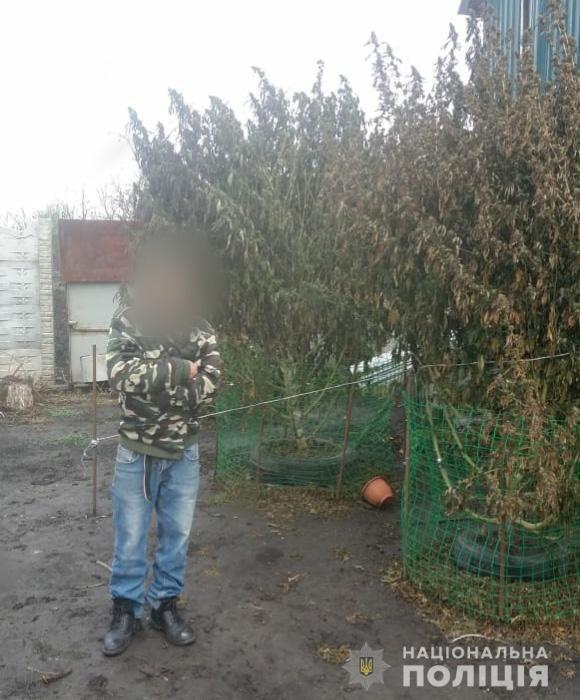 На Днепропетровщине выращивали коноплю высотой в человеческой рост, - ФОТО, фото-1
