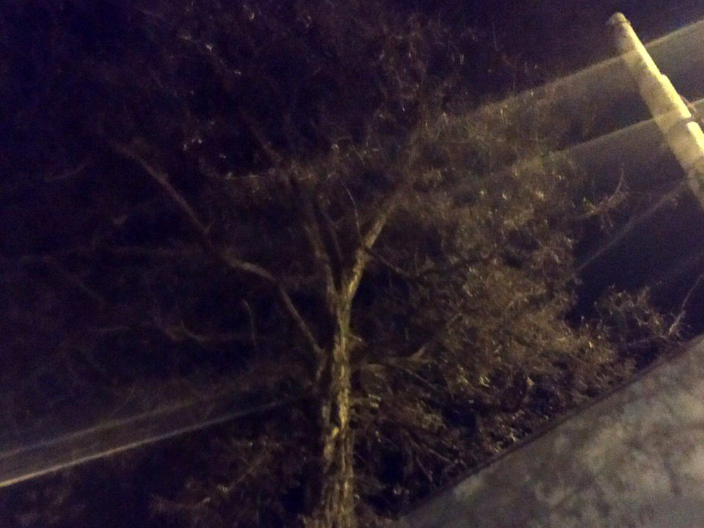 В Днепре пятеро пожарных спасали котика, - ФОТО , фото-2
