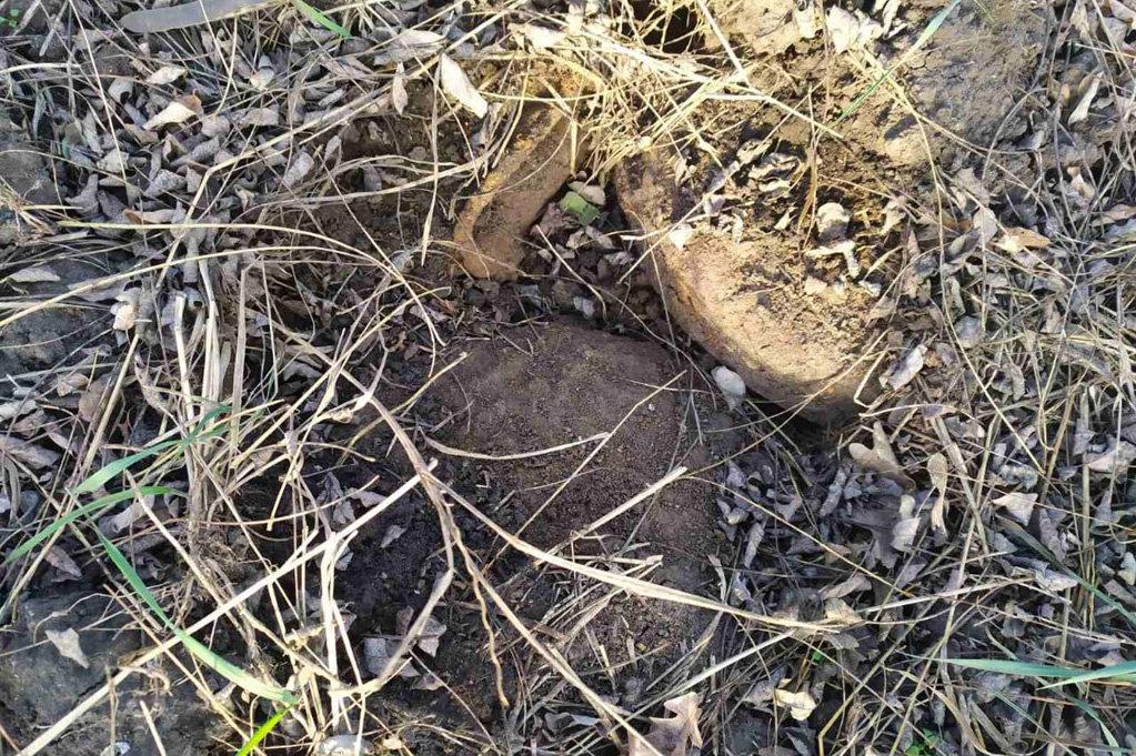 На Днепропетровщине в лесу нашли устаревшие мины и снаряды, - ФОТО, фото-3