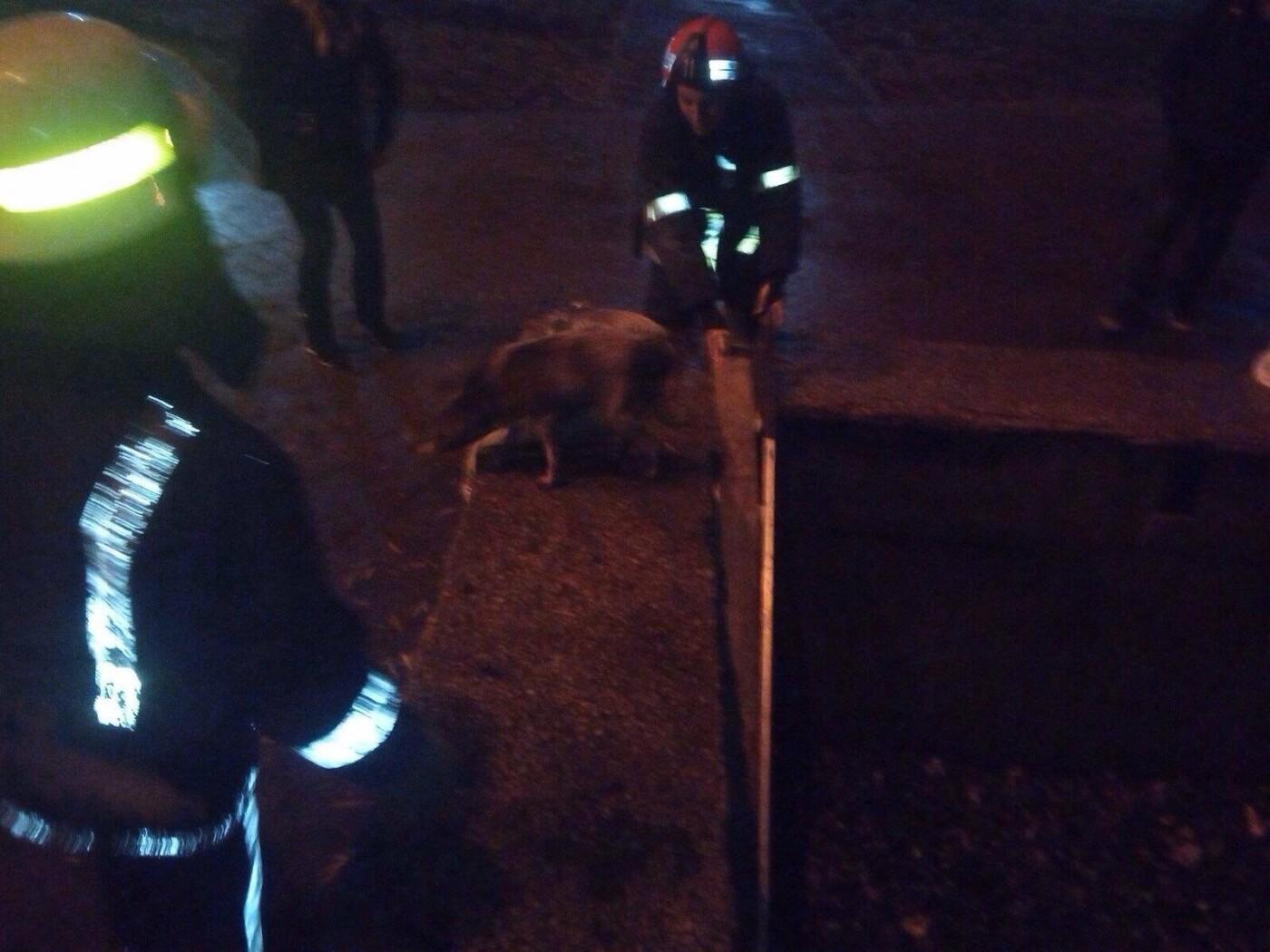 На Днепропетровщине спасатели доставали собаку из ловушки, - ФОТО, фото-2