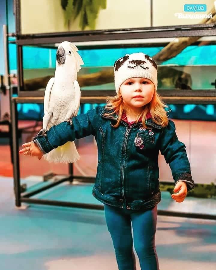 """""""Постоять на голове у аллигатора и выпить кофе с попугаем"""": в Днепр приезжают """"3D Джунгли"""", фото-6"""