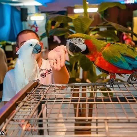 """""""Постоять на голове у аллигатора и выпить кофе с попугаем"""": в Днепр приезжают """"3D Джунгли"""", фото-11"""