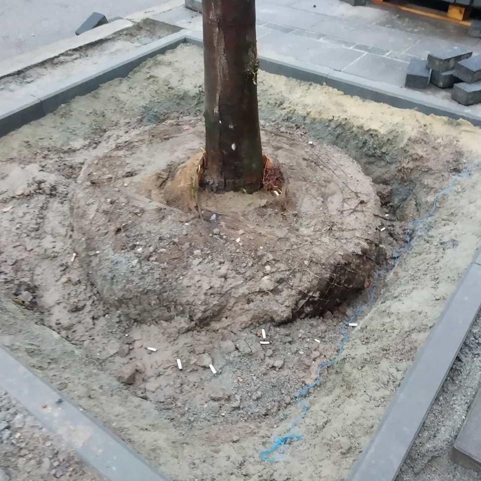 В Днепре на Троицкой деревья высаживают в бетон, фото-1