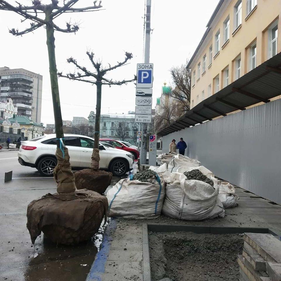В Днепре на Троицкой деревья высаживают в бетон, фото-2