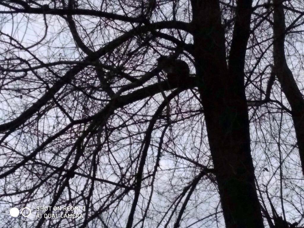 В Днепре пятеро спасателей сняли кота с дерева,  - ФОТО, фото-1