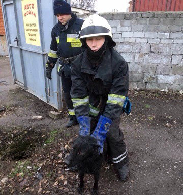 В Днепре собака упала в люк и не смогла выбраться, - ФОТО , фото-1