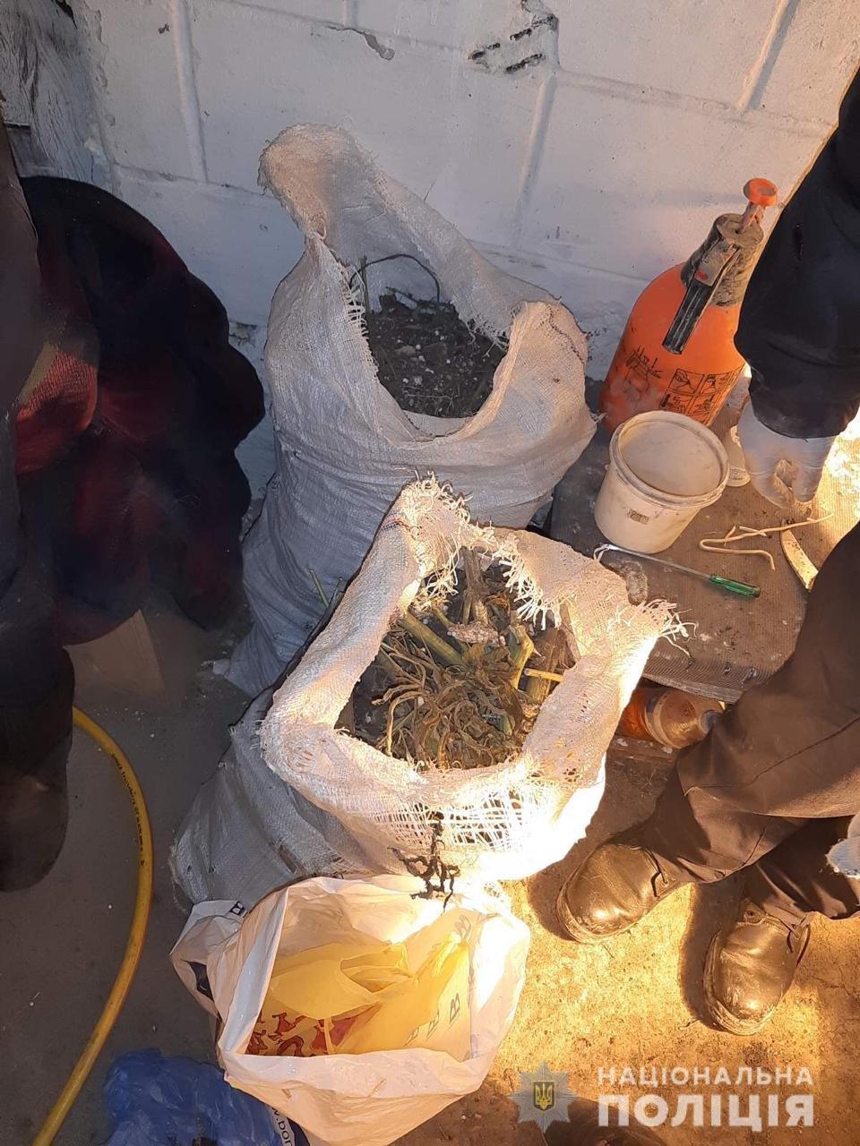 В Днепропетровской области мужчина выращивал у себя дома в теплице 2-метровую коноплю, - ФОТО, ВИДЕО, фото-1