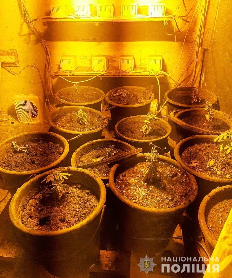 В Днепропетровской области мужчина выращивал у себя дома в теплице 2-метровую коноплю, - ФОТО, ВИДЕО, фото-3