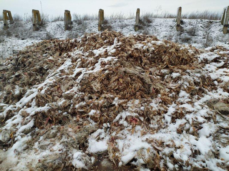 На Днепропетровщине неизвестные выгрузили гору мертвой птицы, - ФОТО, фото-2