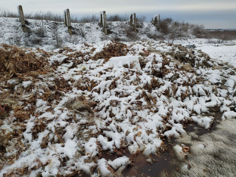 На Днепропетровщине неизвестные выгрузили гору мертвой птицы, - ФОТО, фото-1