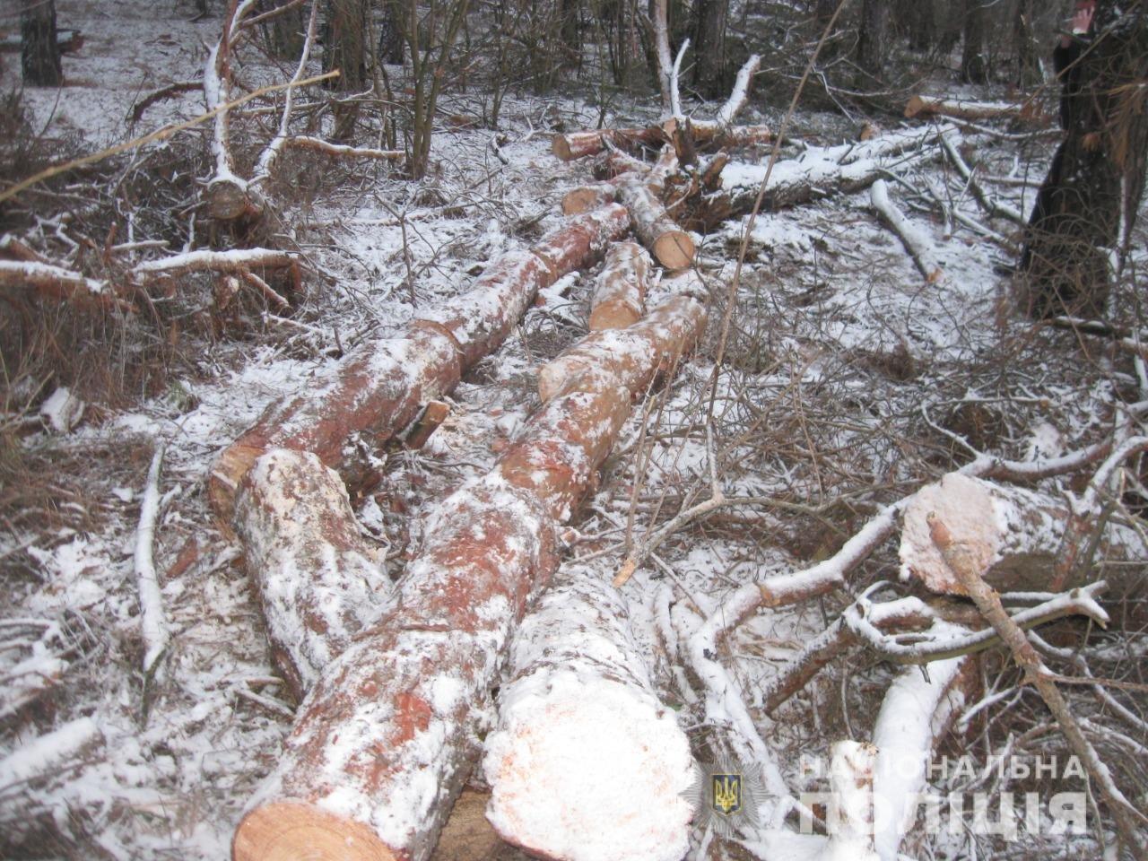 На Днепропетровщине задержали пять браконьеров, незаконно рубивших лес, - ФОТО, фото-1