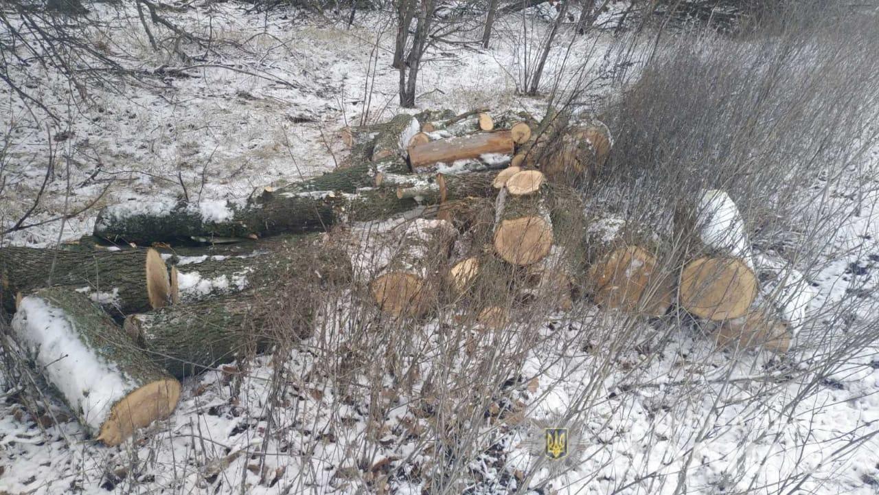 На Днепропетровщине задержали пять браконьеров, незаконно рубивших лес, - ФОТО, фото-3
