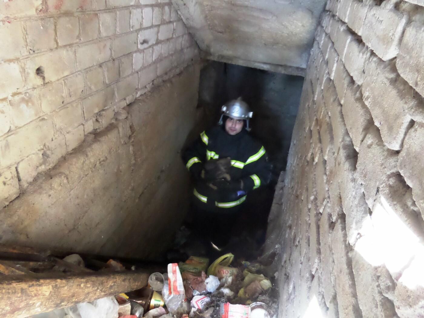 На Днепропетровщине спасатели достали застрявшего в подвале щенка, - ФОТО, фото-1