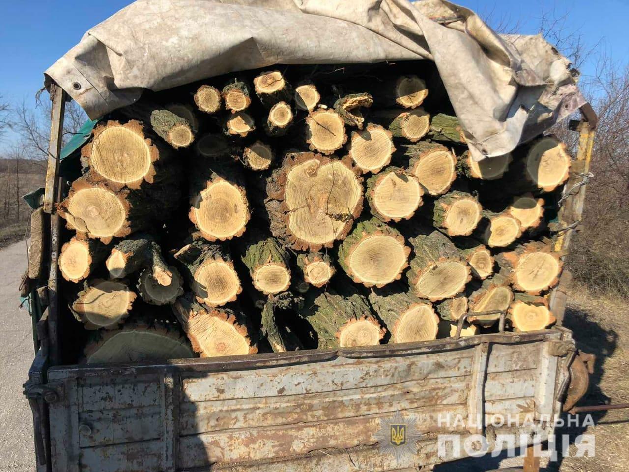 На Днепропетровщине два грузовика незаконно перевозили древесину, - ФОТО, фото-2