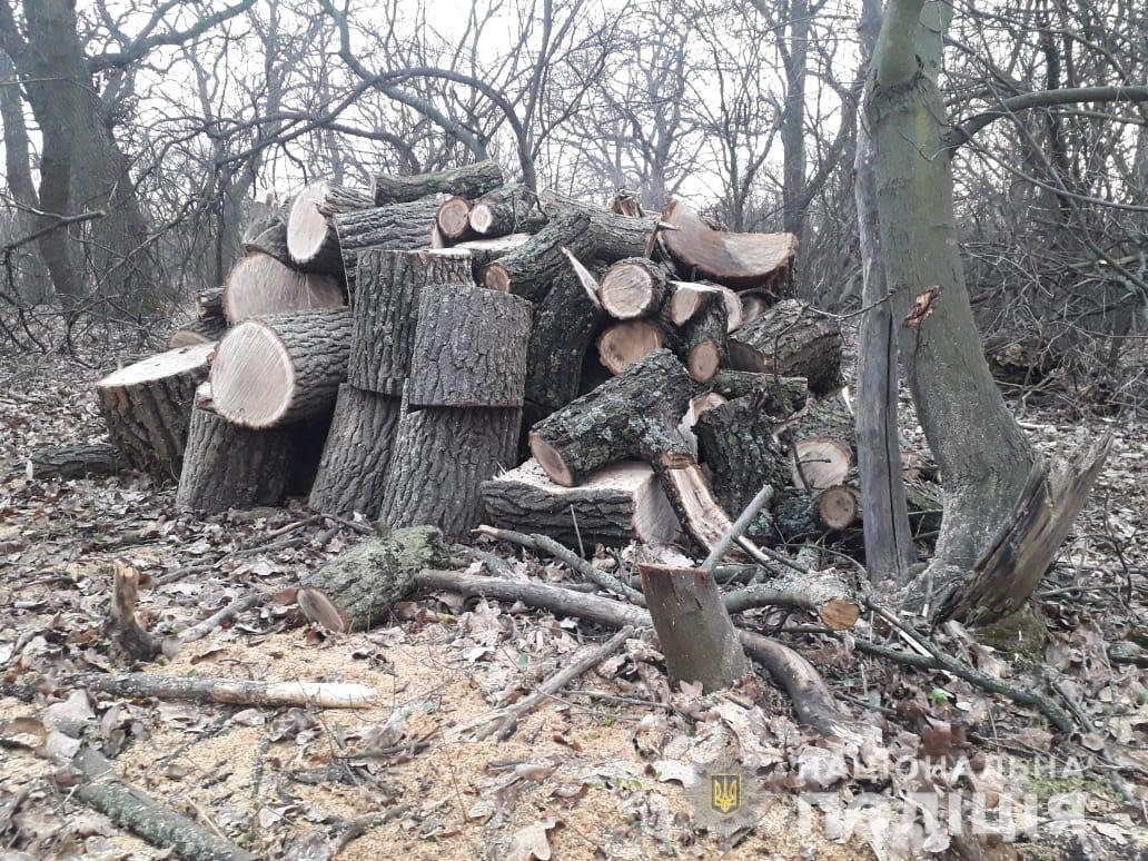 На Днепропетровщине полицейские задержали преступников-лесорубов, - ФОТО, фото-2