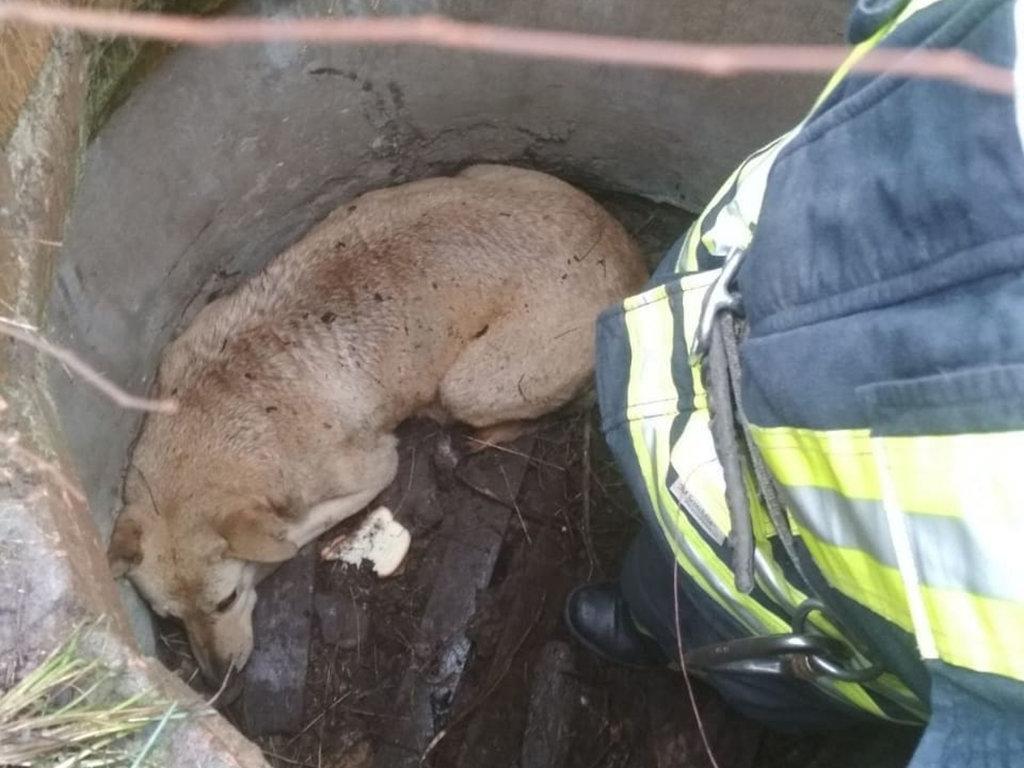 В Днепропетровской области собака упала в колодец и застряла, - ФОТО, фото-2