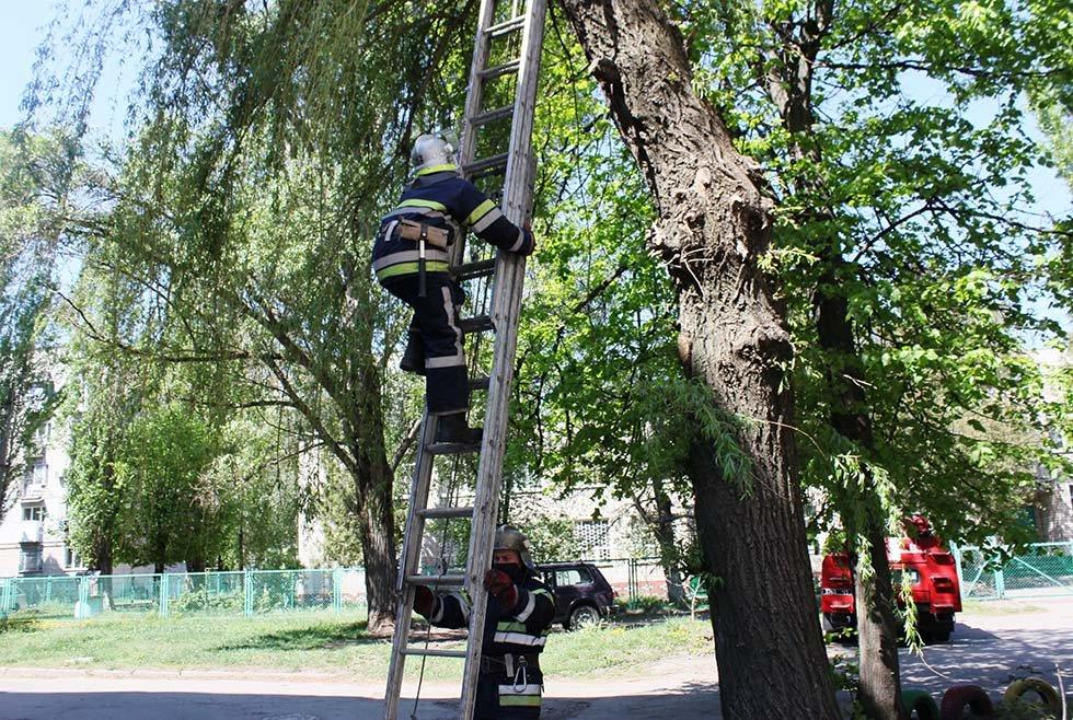 В Днепропетровской области спасатели сняли четырех котят с дерева, - ФОТО, фото-4