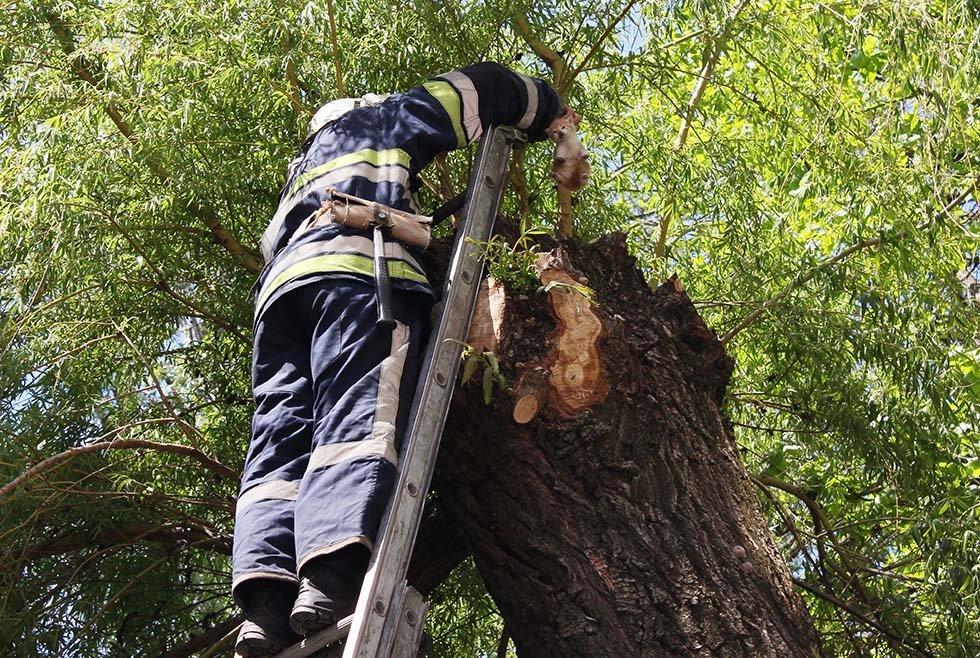 В Днепропетровской области спасатели сняли четырех котят с дерева, - ФОТО, фото-1
