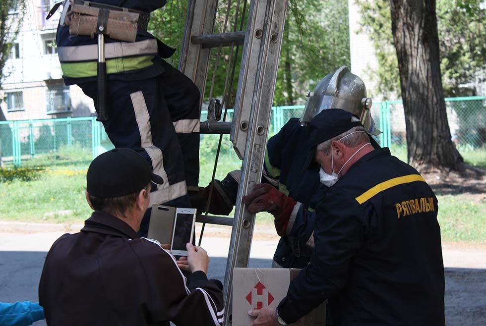 В Днепропетровской области спасатели сняли четырех котят с дерева, - ФОТО, фото-3