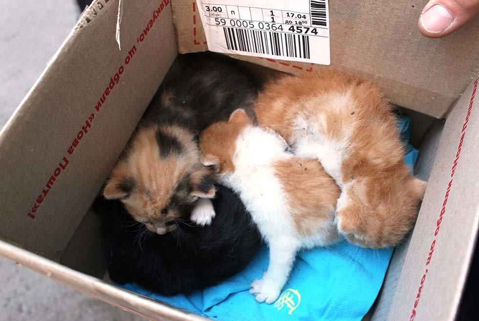 В Днепропетровской области спасатели сняли четырех котят с дерева, - ФОТО, фото-2