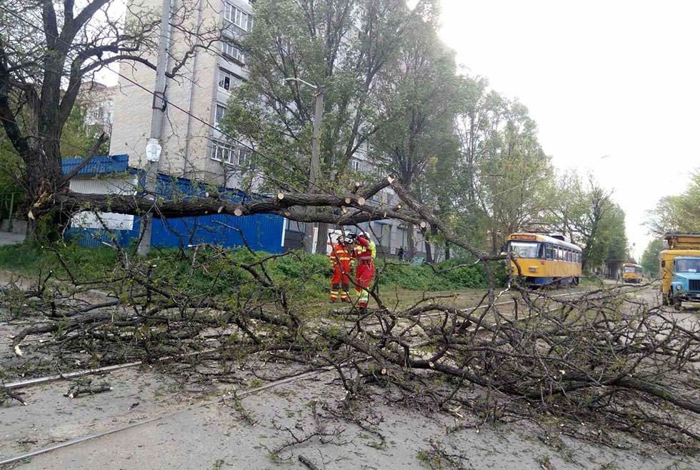 В Днепре дерево упало на линию электропитания электротранспорта, - ФОТО, фото-4