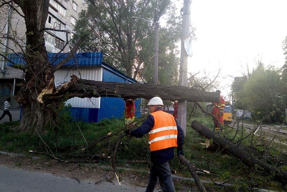 В Днепре дерево упало на линию электропитания электротранспорта, - ФОТО, фото-3