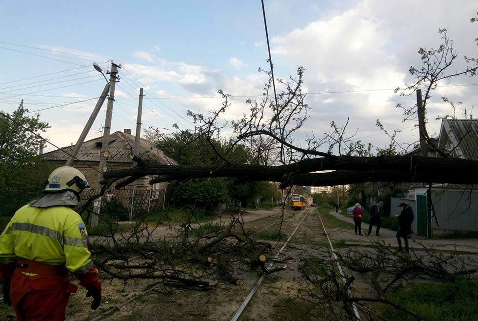 В Днепре дерево упало на линию электропитания электротранспорта, - ФОТО, фото-1